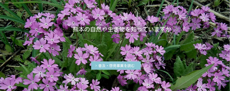 熊本の自然や生き物を知っていますか
