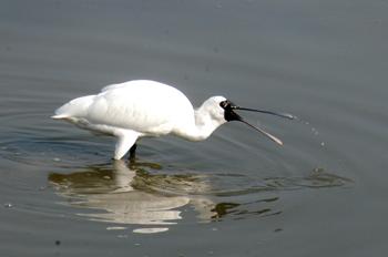 河口の探鳥会