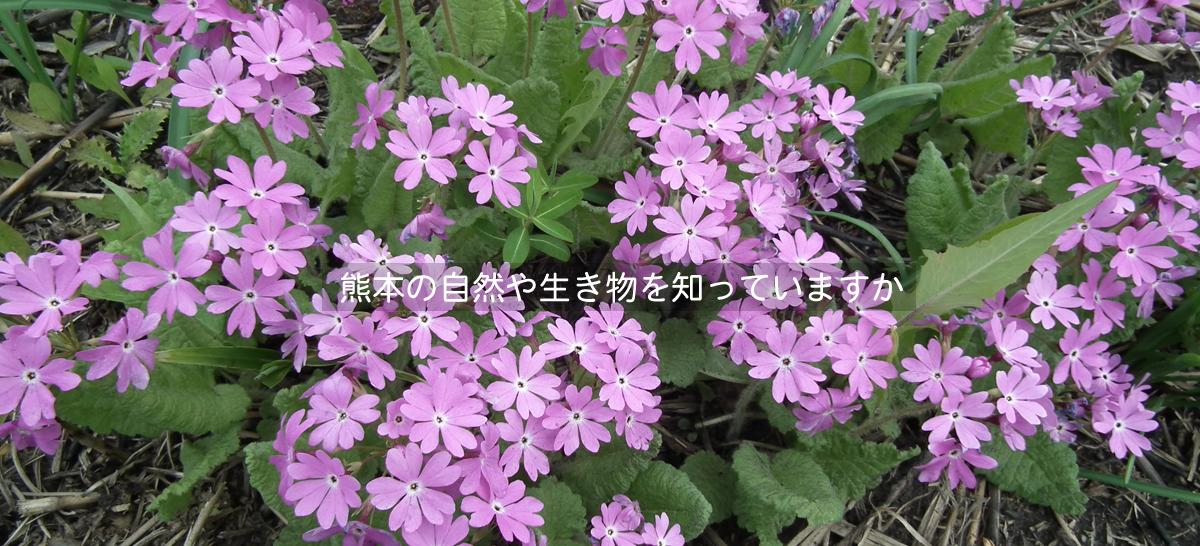 熊本の自然や生き物を知っていますか「普及・啓発」
