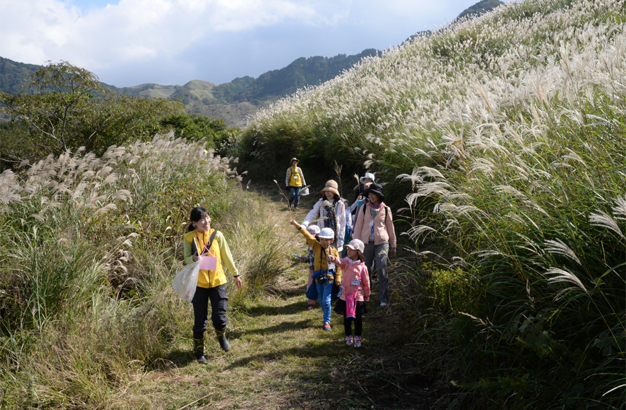 阿蘇の野草観察と草原探検の様子