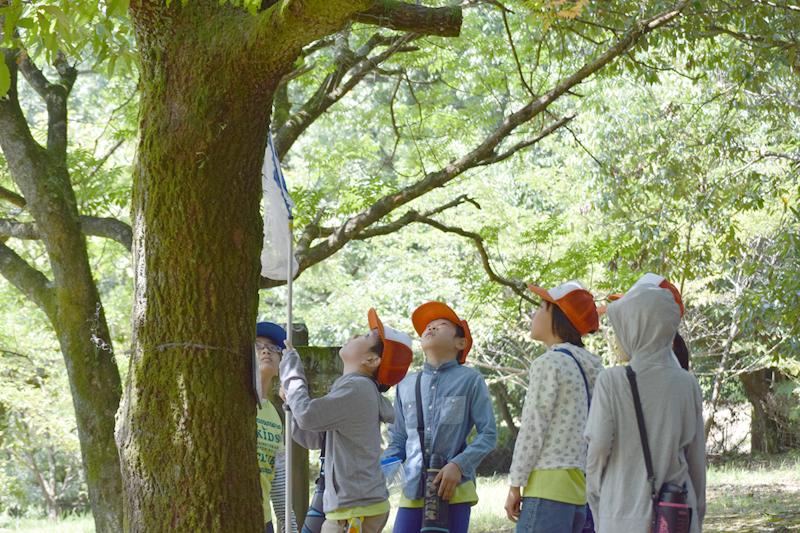 四季の生き物観察(熊本市内の江津湖など)