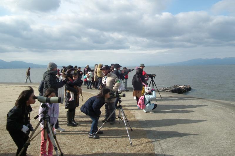 荒尾干潟の野鳥観察の様子